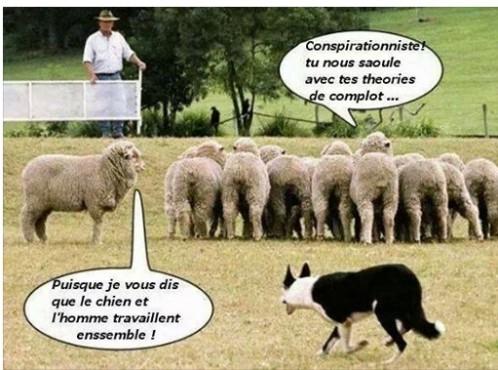 conspirationnistes-ou-moutons.jpg