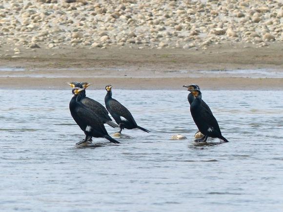 au fil de l'eau, de beaux oiseaux;