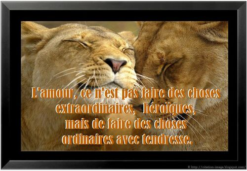 Hommage aux animaux *8*