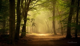 Si merveilleuses forêts ...