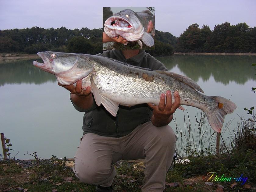 sandre 5kg800