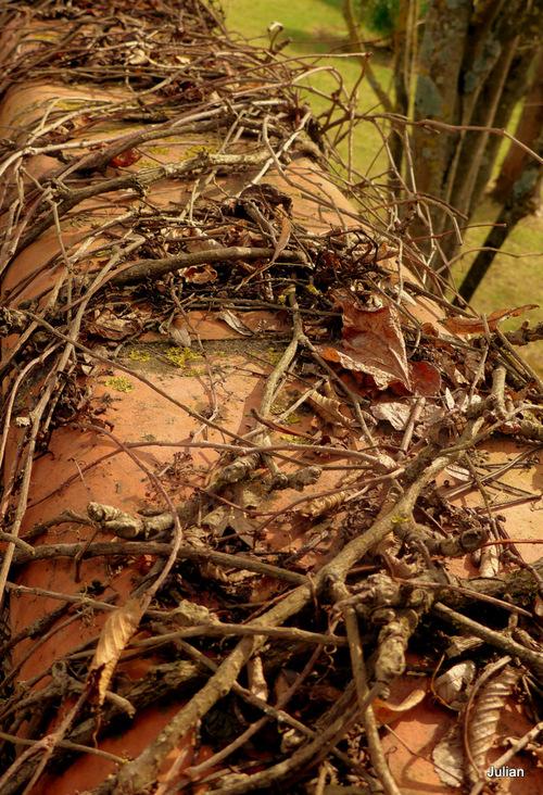 Sur un mur : un nid !