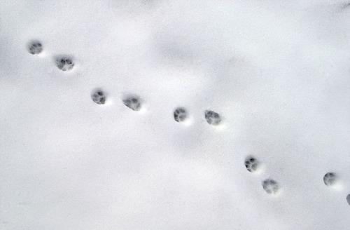 Classe de neige 2010