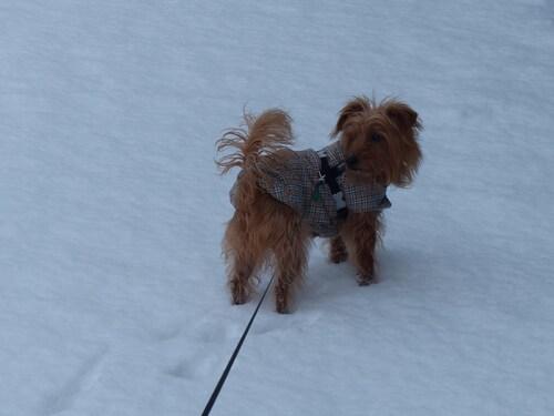 Les pieds dans la neige 1