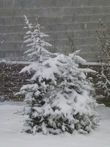 La neige est arrivé