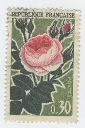 rose-ancienne.JPG