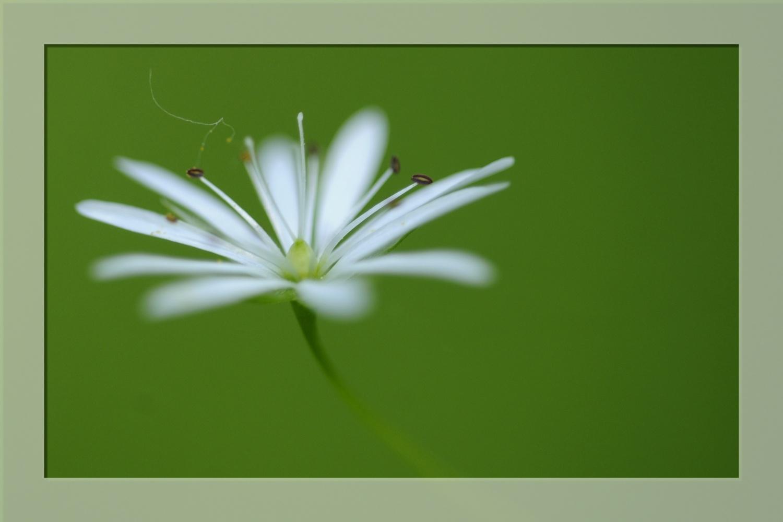 Petite Fleur Blanche Moment De Vie