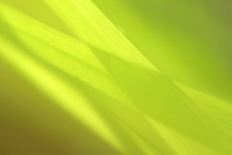 vert suite