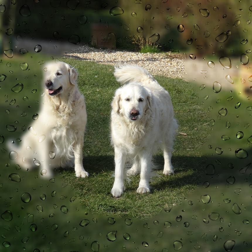 L'image contient peut-être: chien et plein air