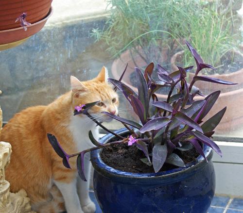 Mon chat est un chat jardinier....