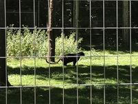 Voici quelques photos souvenirs de la sortie au Parc des Félins des ce2 cm1 !