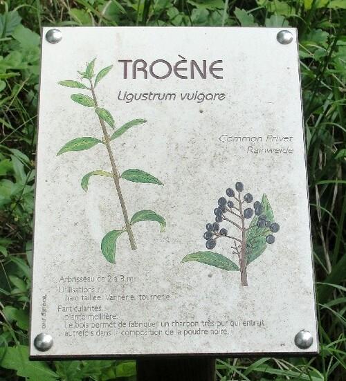 -Arbustes et arbres de nos forêts Châtillonnaises