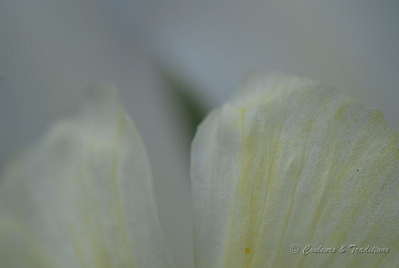Iris et vous