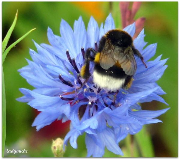 Méli-Mélo de fleurs et d'abeilles .
