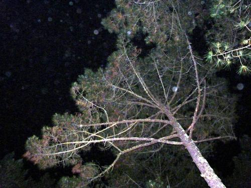 La forêt de nuit...
