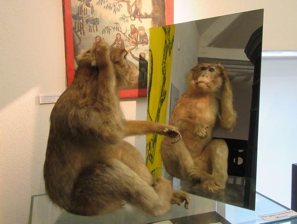 Gloria Friedmann a exposé au musée Buffon de Montbard....