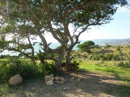 Autour d'Agadir