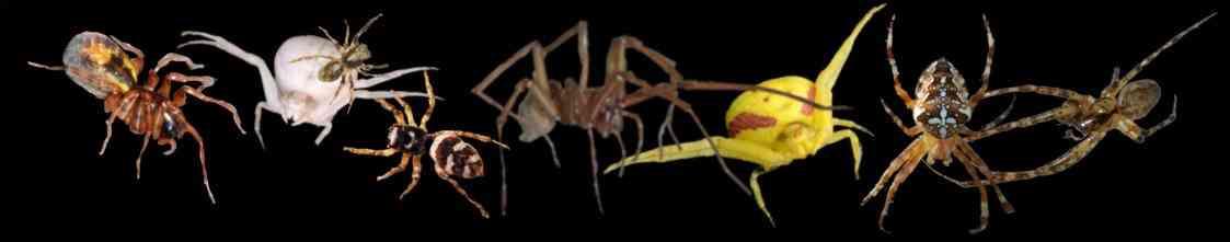 Vers l'accueil des araignées