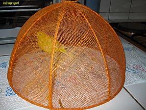 Nettoyage-cage-fifi-juin-2011 1334 (Copier)