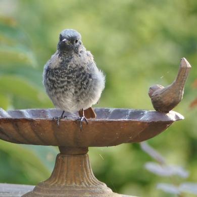 Dernières nouvelles des oiseaux...