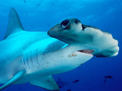stranges sharks ( etranges requins)