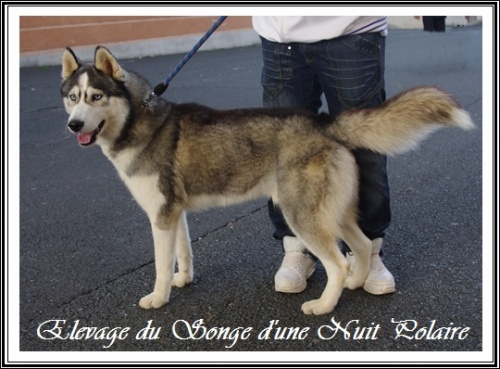 Rio à l'Exposition canine de Castres (17 novembre 2012)