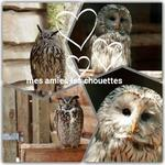 mes chouettes