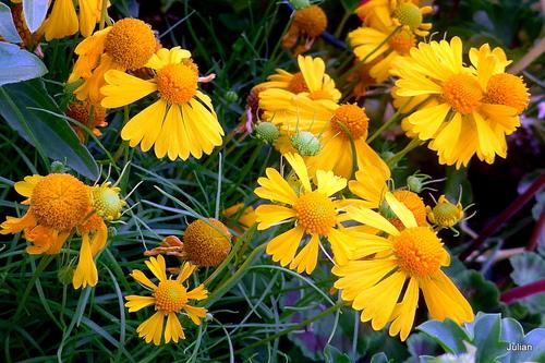 Uns sélection de fleurs jaunes !