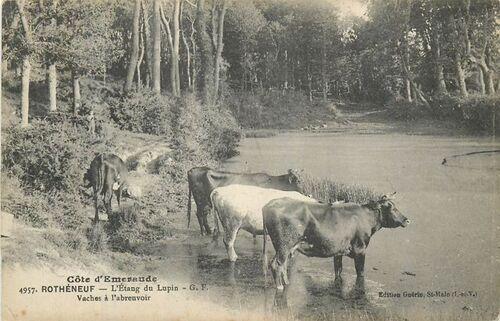 10 - Des vaches, cartes postales encore