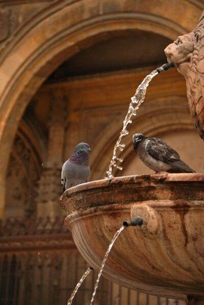 Fontaines et oiseaux en hiver