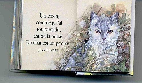 chat poète