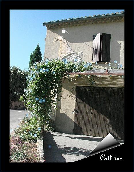 ipomees--sur-la-route--de-nyons-copie-1.jpg