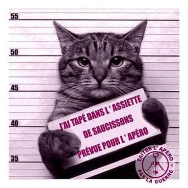 """Résultat de recherche d'images pour """"bonne nuit chat humour"""""""