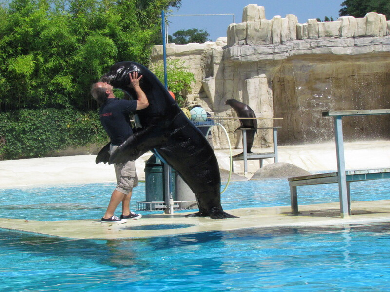 SPECTACLE D'OTARIES AU ZOOPARC DE BEAUVAL .