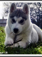 Ourka (3,5 mois)
