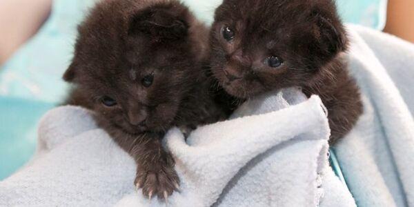 """Miraculeux sauvetage de deux chatons """"postés"""" par erreur"""