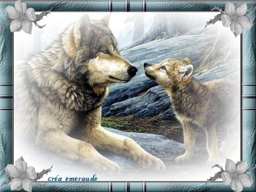 Les loups !