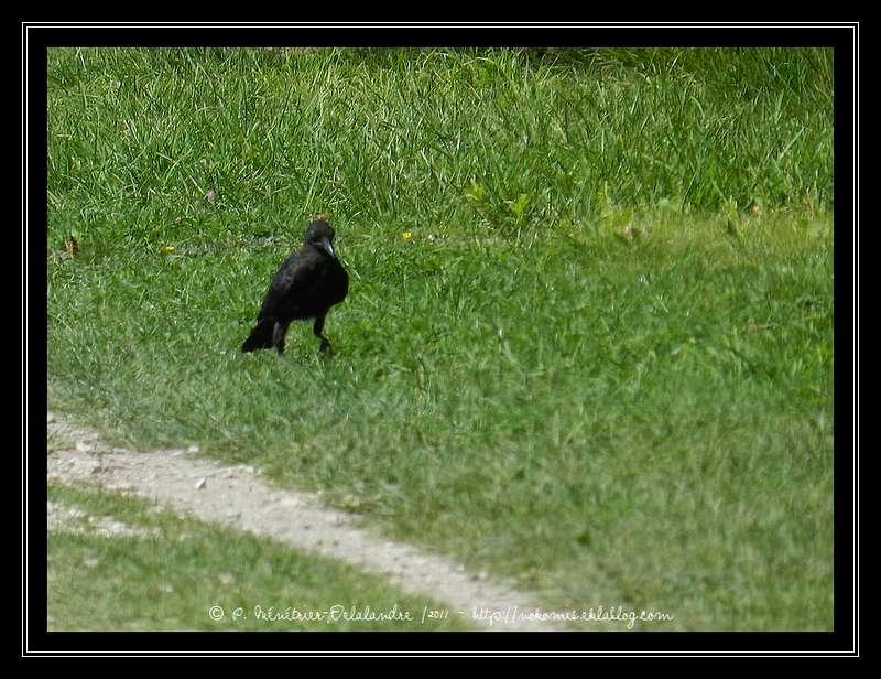 Quelques oiseaux rencontrés en Seine et Marne