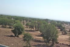 RESERVE BIOSPHERE DE L'ARGANERAIE