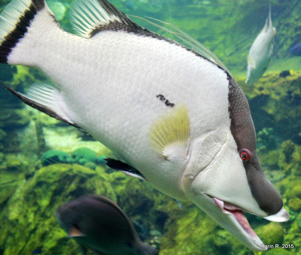 Un vrai poisson pour aujourd'hui !