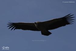 Oiseaux Variés 5