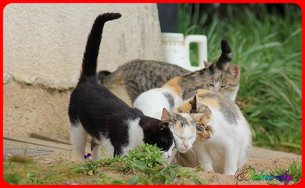 une chatte et ses trois chatons