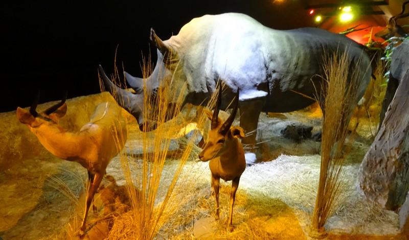 Parc Animalier des Pyrénées,  Argelès-Gazost (65)  (3)