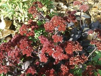 Je vous souhaite un bel automne ! I wish you a nice autumn !