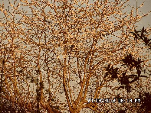 arbre-002.JPG