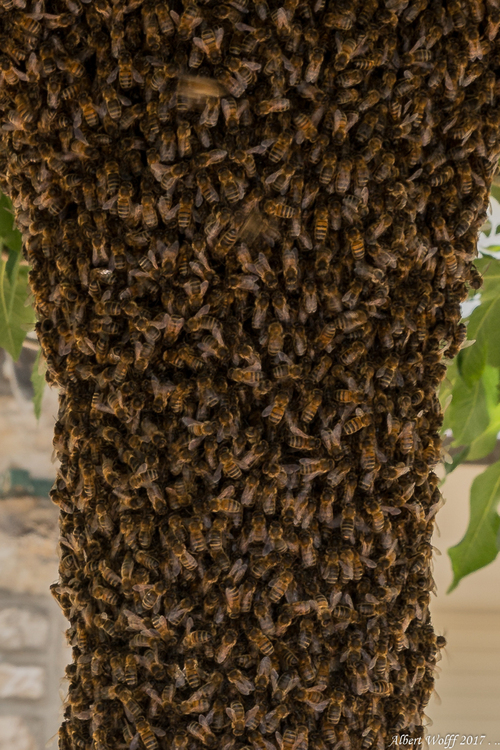 Que d'abeilles !