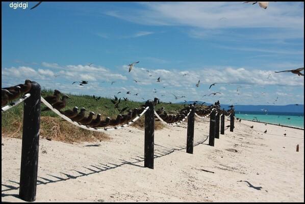 Plongee-Mickaelmas-Cay-0--381--border.jpg