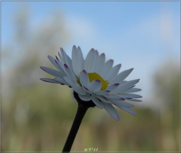 Fleurs sauvages printannières