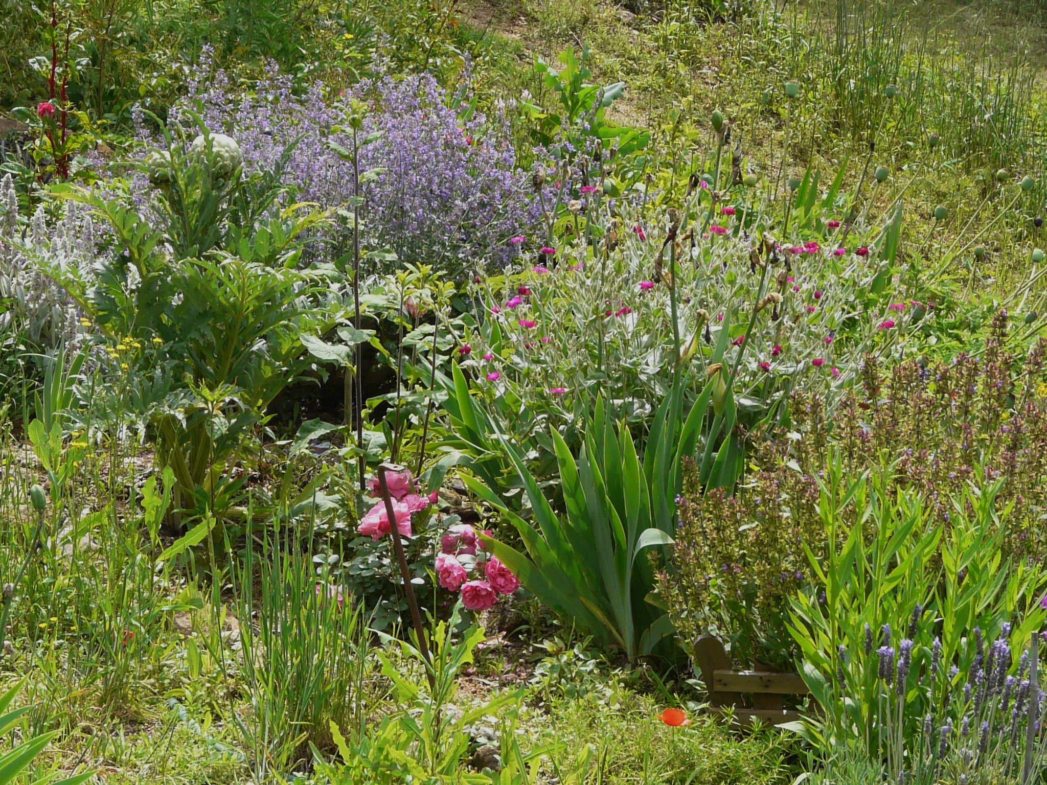 Jardin anglais en ardeche mon boudoir multim dia for Jardin en anglais