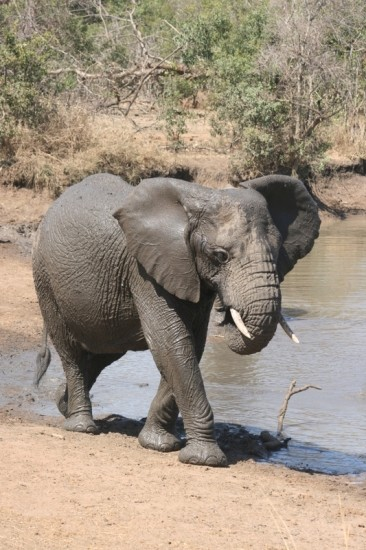 elephants-swaziland-1105569936-1157932